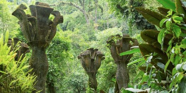 La nueva forma de explorar el Jardín Escultórico de Xilitla