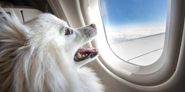 Nuevas políticas para volar con animales de apoyo emocional